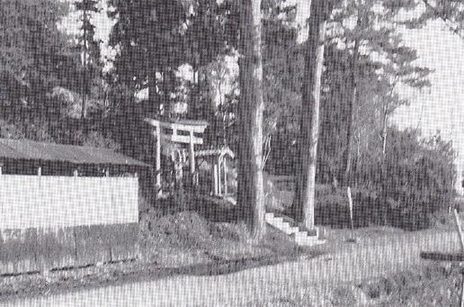 大正初期当時、天を突いて立つ二本のモミの大樹